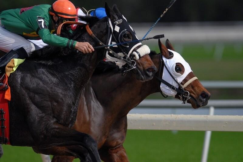 2頭の馬が競り合っている画像
