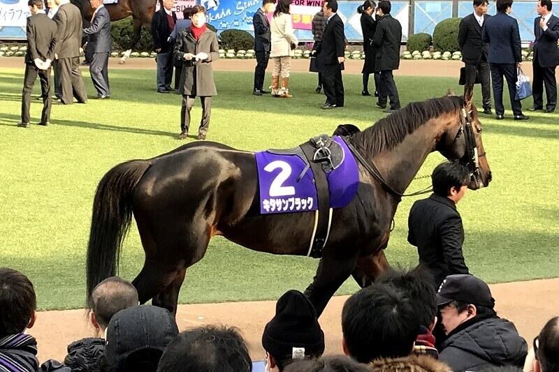 競馬の魅力 間近で見られるキタサンブラック