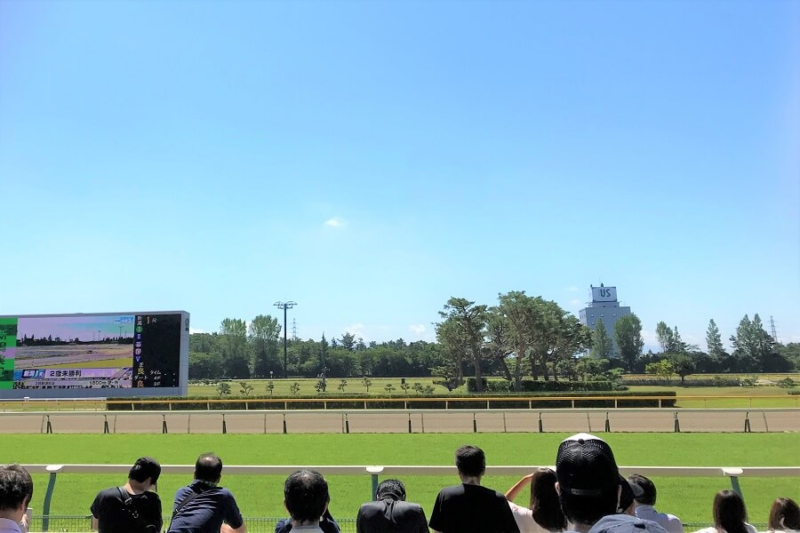 新潟競馬場の芝コース直線
