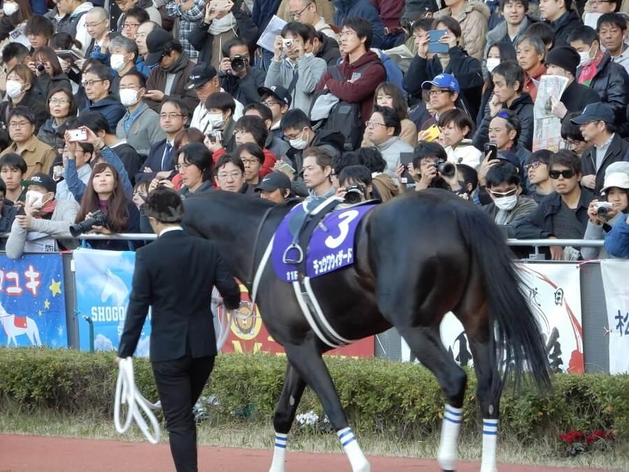 中京競馬場のチャンピオンズカップ時のパドックを歩くチュウワウィザード